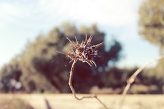 Thorns Royalty Free Stock Photography
