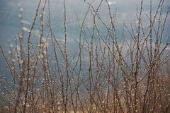 Thorny Acacia Branches Stock Photography