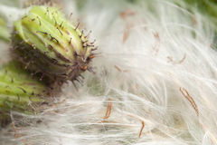 Thorny Bud and Pollen Background Stock Images