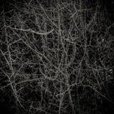 Thorny Bush Background Texture Royalty Free Stock Photos