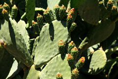 Thorny cactus Stock Photo