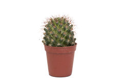 Thorny cactus plant isolated Stock Photo