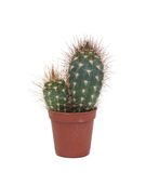 Thorny cactus plant isolated Stock Photography