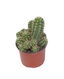 Thorny cactus plant isolated Royalty Free Stock Photo
