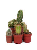Thorny cactus plants isolated Stock Image