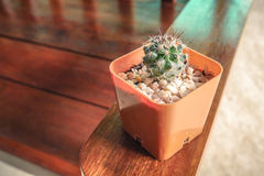 Thorny Cactus. Red head and tiny buds Stock Photo