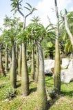 Thorny cactus tree Stock Photos