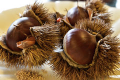 Thorny chestnuts Royalty Free Stock Images