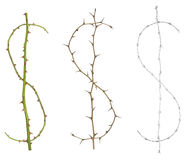 Thorny dollar signs. Isolated dollar signs, made of thorny rose stems and one with barbwire in grey scale. It could stand for protecting money, strong currency Stock Photos