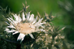 Thorny Flower. A close up on a thorny flower Stock Images