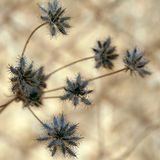 Thorny Grass Royalty Free Stock Image