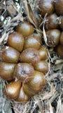 Thorny palm Royalty Free Stock Image