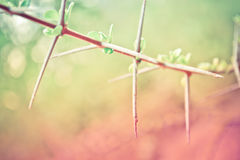 Thorny plant. In Vintage and pastel style Royalty Free Stock Photography