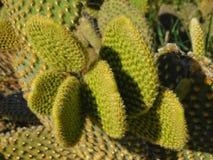 Thorny plants Royalty Free Stock Photos