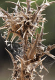 Thorny plants, detail, blurred background. A detail of the top of a thorny plant, portrait cut Stock Photos