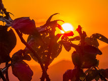 Thorny plants at sunset Stock Image
