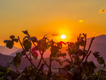 Thorny plants at sunset Stock Photo