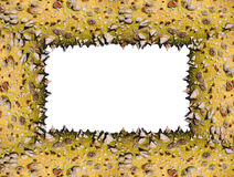 Thorny trunk frame, original colors Royalty Free Stock Photos