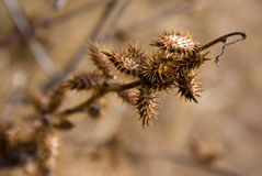 Thorny Winter Royalty Free Stock Images