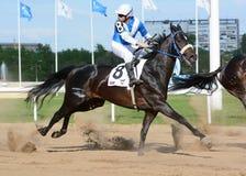 Thoroughbred άλογο κούρσας και αναβάτης στην κίνηση Στοκ Φωτογραφία