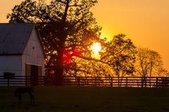 Thoroughbred αγρόκτημα αλόγων - Bluegrass - κεντρικό Κεντάκυ στοκ εικόνες