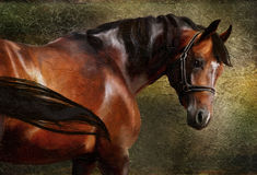 The Thoroughbred. Classical portrait. Hand drawing digital picture - Simulation in old painting style Royalty Free Stock Photo