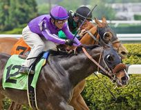 Thoroughbred Action at Belmont Park stock photo