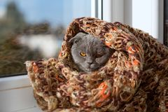 A thoroughbred crochet in a scarf looks out the window at the sun Royalty Free Stock Images