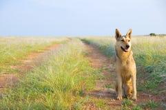 Thoroughbred dog Royalty Free Stock Photo