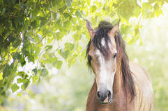 Thoroughbred horse on background of summer sun leaves. Outdoor Royalty Free Stock Images