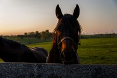 Thoroughbred Horse on Farm - Bluegrass - Central Kentucky. A sunset view of a thoroughbred horse on a farm at sunset in the Bluegrass region of central Kentucky Royalty Free Stock Images