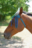 Thoroughbred Horse with Fly Mask Protector Royalty Free Stock Photography