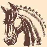 Thoroughbred horse head profile racing exhibition mane Stock Photos