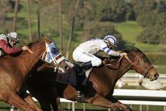 Thoroughbred Horse Race. ARCADIA, CA - JAN 10, 2009: Jockeys surge to the finish at historic Santa Anita Park in Arcadia, CA, on January 10, 2009. A popular Stock Photo