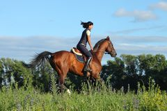 Thoroughbred racer runs on a green meadow. Thoroughbred horseback racer runs on a green spring meadow Royalty Free Stock Photos