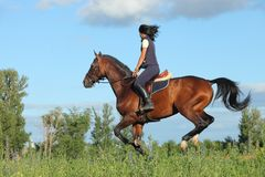 Thoroughbred racer runs on a green meadow. Thoroughbred horseback racer runs on a green spring meadow Royalty Free Stock Image