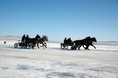 Thoroughbred Horses. Khakassia, the Russian Federation - on March, 7TH 2010 Jockeys finish in race in honor of a holiday of a wire of winter, on stood lake Shira Royalty Free Stock Photography