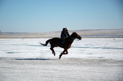 Thoroughbred Horses. Khakassia, the Russian Federation - on March, 7TH 2010 Jockeys finish in race in honor of a holiday of a wire of winter, on stood lake Shira Royalty Free Stock Photo