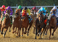 Thoroughbred Horses Head Down the Homestretch Royalty Free Stock Images