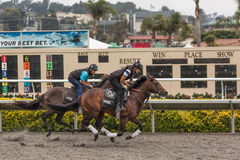 Thoroughbred horses warming up big race Royalty Free Stock Image