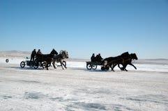 Thoroughbred-Pferde Lizenzfreie Stockfotografie