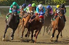 Thoroughbred-Pferden-Kopf hinunter die Rennstrecke Stockbild