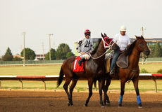 Thoroughbred Race Horse. A thoroughbred race horse is led out just before the race stock image