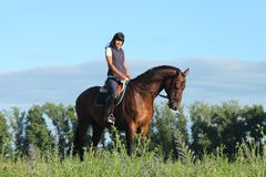 Thoroughbred racer runs on a green meadow. Thoroughbred horseback racer runs on a green spring meadow Royalty Free Stock Photo