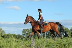 Thoroughbred racer runs on a green meadow. Thoroughbred horseback racer runs on a green spring meadow Royalty Free Stock Images