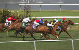 Thoroughbred Turf Race -- 2. A field of thoroughbred horses races down a beautiful grass track stock image