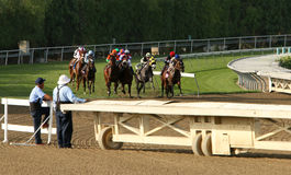 Thoroughbreds Storm Down The Hillside Turf Course Royalty Free Stock Photos