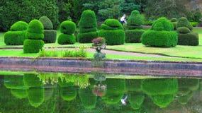 Thorpe Perrow Arboretum Yew Bushes topiaire Photographie stock libre de droits