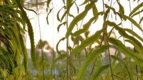 Thorugh d'éclat de Sun où le soufflement sur l'arbre de vent laisse banque de vidéos