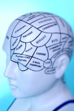 Thought. Model of head with many thoughts Royalty Free Stock Photos